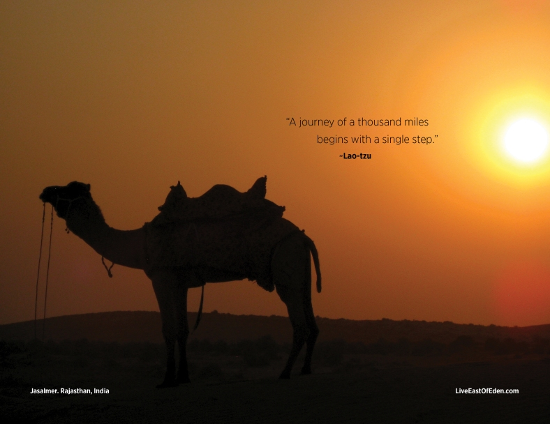 Camel Safari at Sunset (Thar Desrt, India)