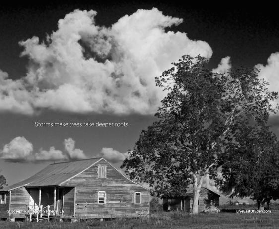 Shack on St. Joseph Plantation. Vacherie, Louisiana