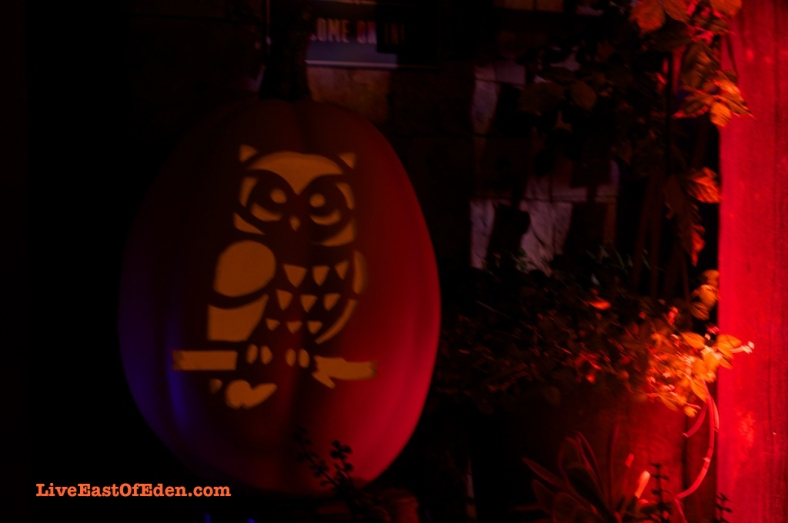 Halloween_Jack_O_Lantern_Carved_Pumpkin_Owl