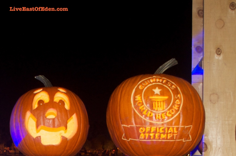 Guinness World Record Official Attempt for Longest Line of Carved Pumpkins