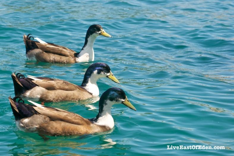 All my ducks in a row!