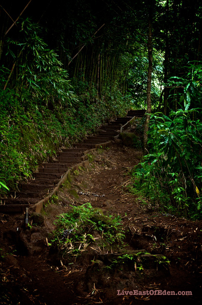 Manoa Fall Trail, Honolulu, Hawaii